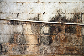 Photo of damp, wet, moldy block foundation wall